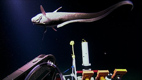 Rattail fish interested in some of the equipment