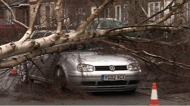 Silver birch tree fallen across a car bonnet.