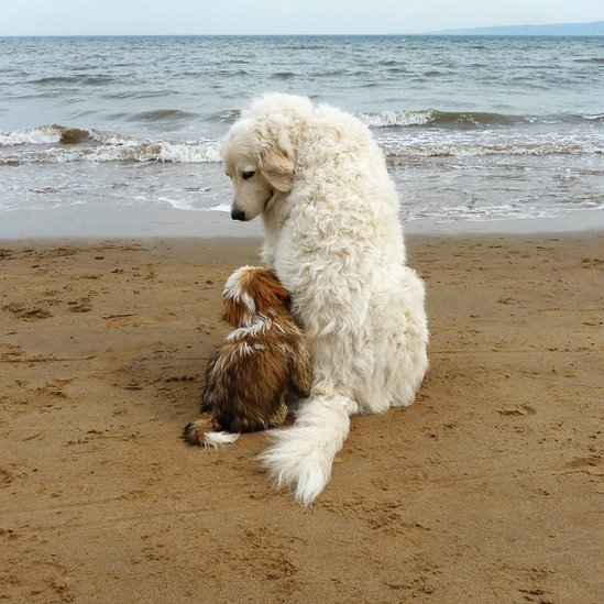 Two dogs on a beach