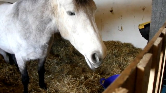 Horse inside its owner's home