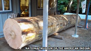 A Smithsonian Institution photo of the tree trunk