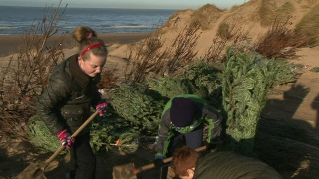 Christmas trees in Formby