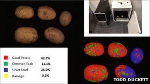 New potato-spotting AI built with off-the-shelf tech