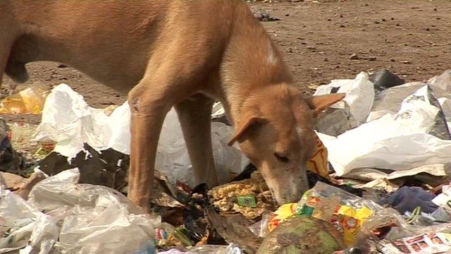 Dog eating rubbish