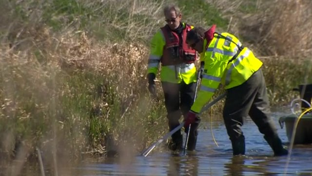 Environment agency rescuing fish