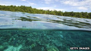 Mangroves and seawater