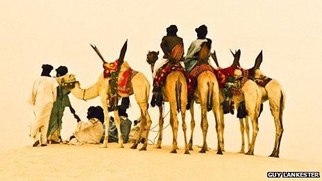 Camels outside Timbuktu