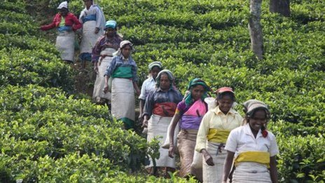 Most of the labourers belong to Sri Lanka's poorest Tamil community