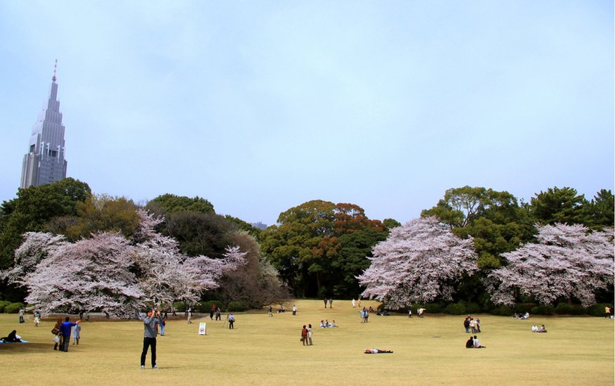 Blossom on trees in Japan