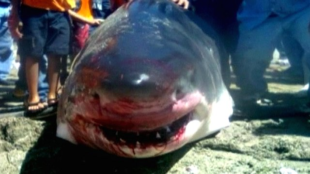 Shark caught in Mexico