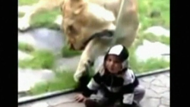 Toddler and lioness