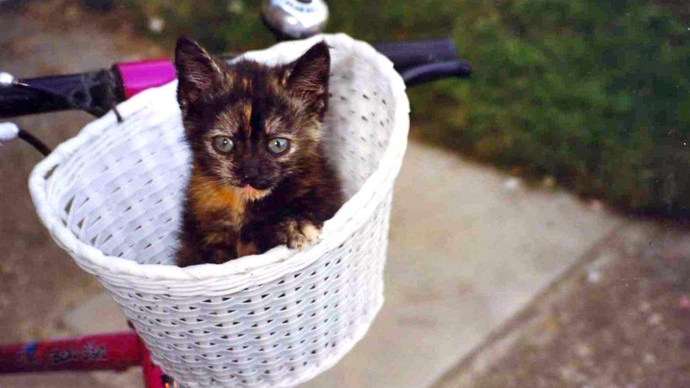A kitten in a basket