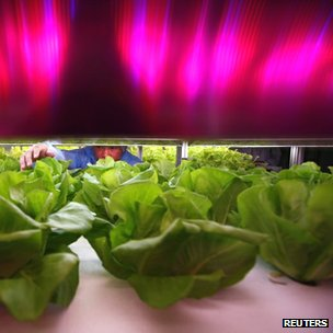 Lettuces growing in computer-controlled greenhouse in China