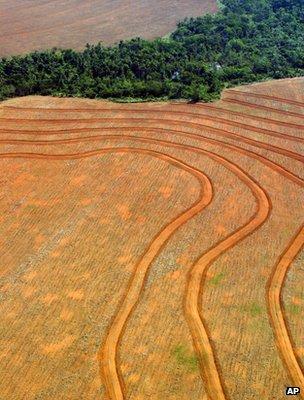 Deforested area, Brazil (Image: AP)