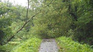 Fallen tree on the Taff Trail in Cardiff