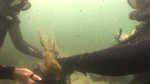 Deep sea divers picking trash underwater