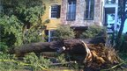 Tree fallen in front of building. Photo: Chris Haws