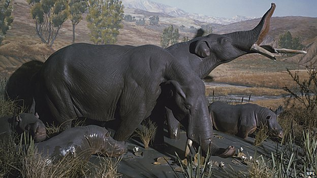 Artist's impression of Amebelodon