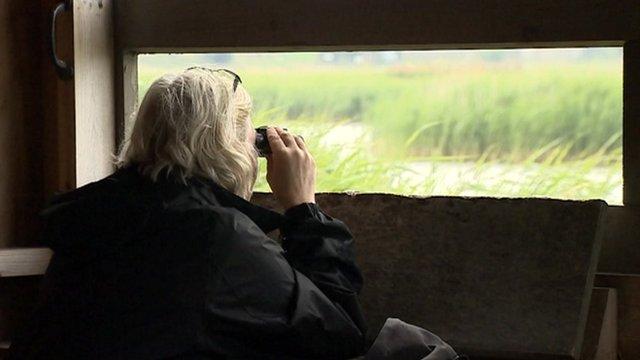 Bird watcher at Cley