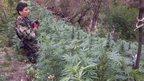 post-image-Peru burns record 50-tonne marijuana haul