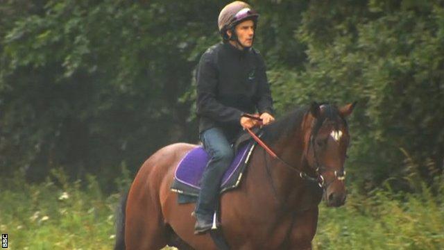 Frankel the horse