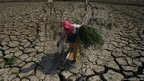 A villager carries grass while walking through a dry dam in the Bojonegoro district of Indonesia's East Java