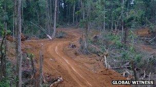 Dugbeh Forest Logging Road