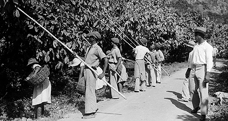 Cocao harvesters in Grenada circa 1934