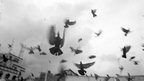 "The picture titled ""Pigeons"" was taken by Bhavesh Patel (born blind)"