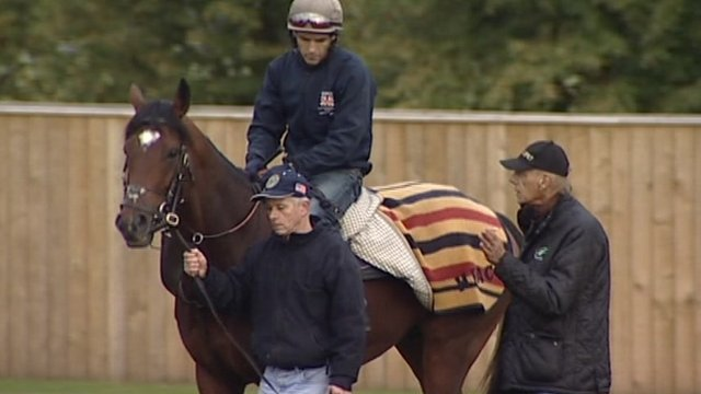 The race horse Frankel