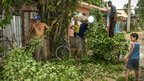 Citizens of Bayamo prune trees on October 24, 2012