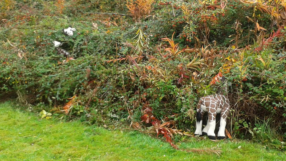 Toys in bushes