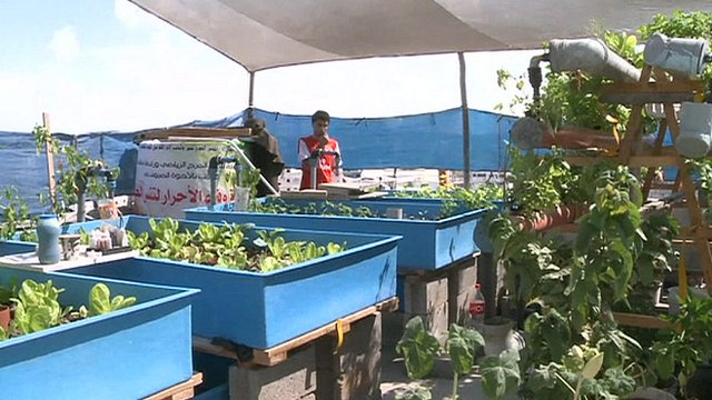 One of Gaza's rooftop gardens