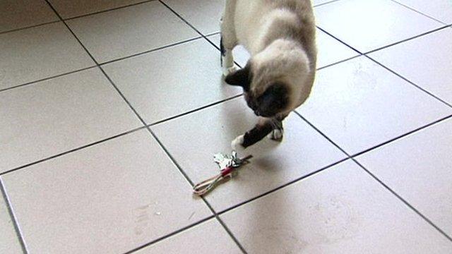 Klemens the cat