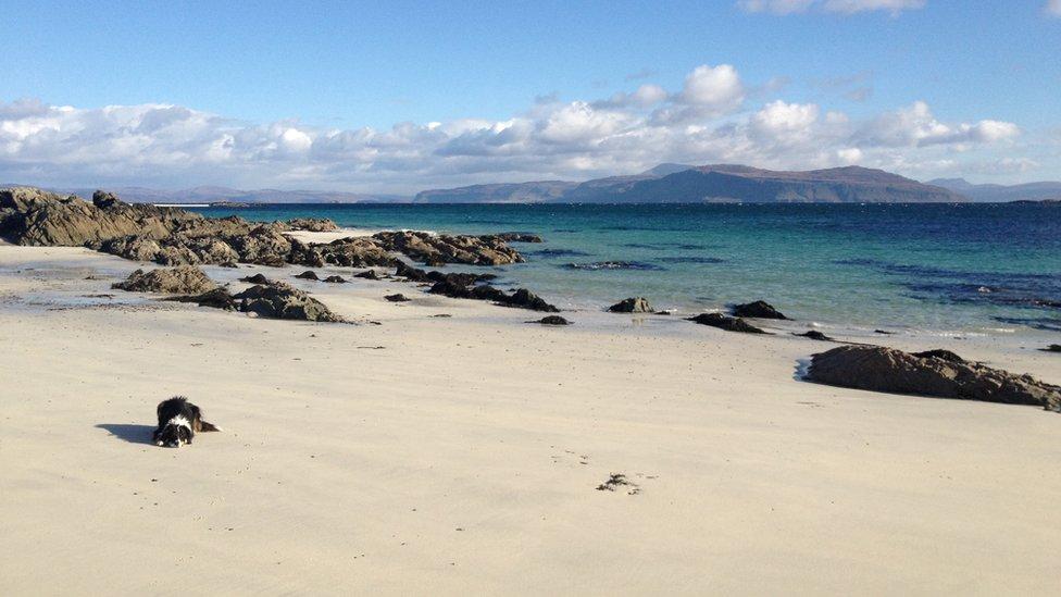 Dog on the beach on the Isle of Iona