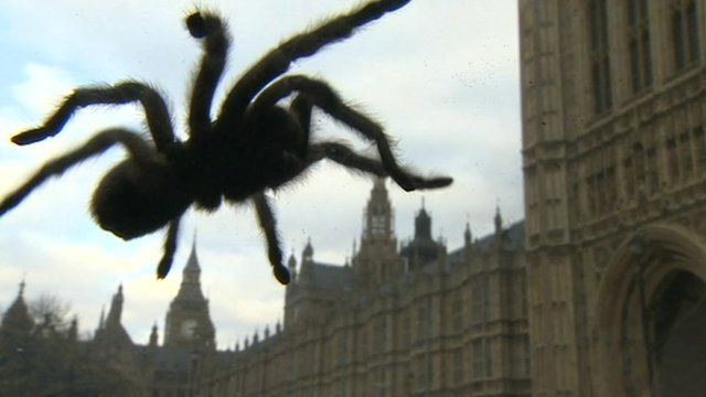 Spider in Westminster
