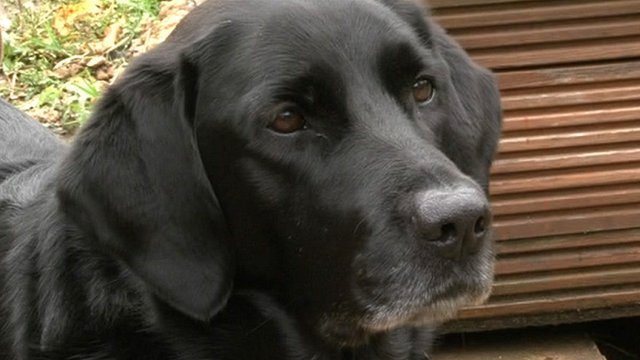 Violet the hearing dog