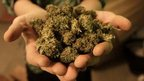 post-image-Marijuana legalisation in the US: Five burning questions