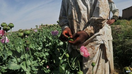 In this file photograph, Afghan opium poppy farmers score opium poppies in a field at Habibullah village in Khanashin District, Helmand province