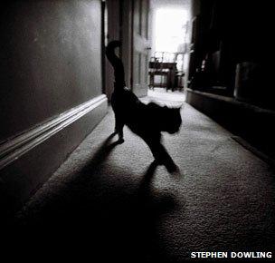 _64295641_cat_dowling304.jpg