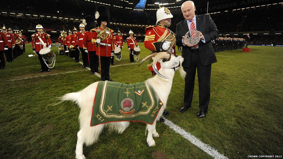 Bbc News Goat Major Retires After 35 Years At The Reins