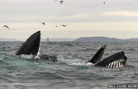 Humpback whales creating stir off Ireland