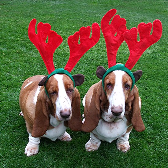 Basset hounds, Lucie and Lottie