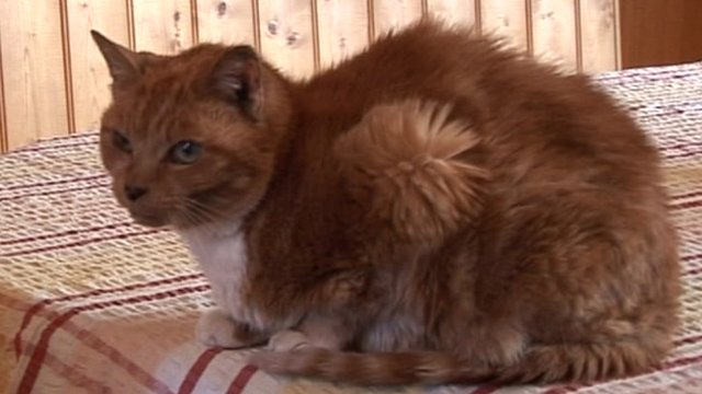 Margaret the cat from Stamford Bridge