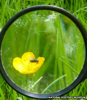 Fly on a flower through a looking glass (Image: Natural History Museum)