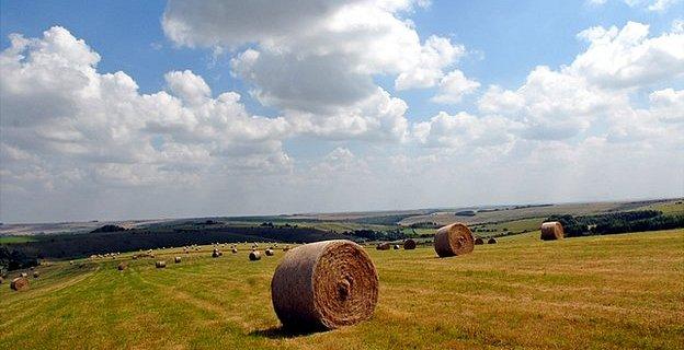 Farm in UK