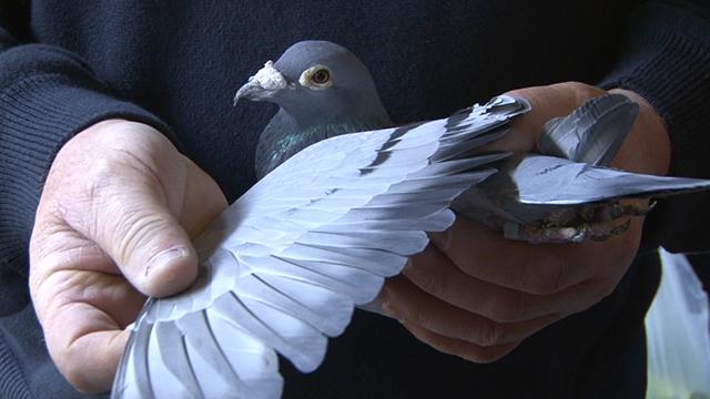 Man holding a pigeon