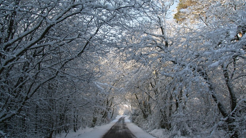 Road through snow covered trees