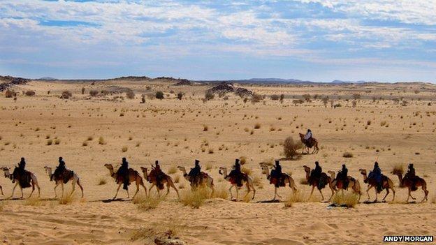 Camel train in the desert