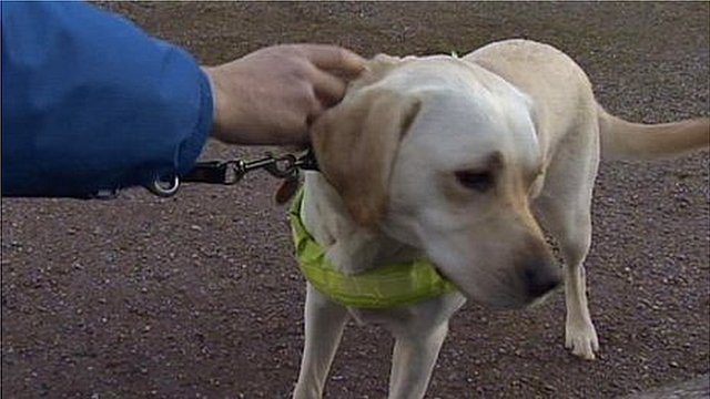 Wag the guide dog